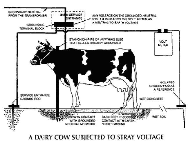 symptoms of stray voltage